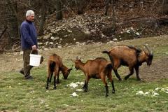 CaCirigiolo-animali-3